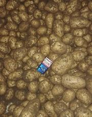 Картофель оптом тут